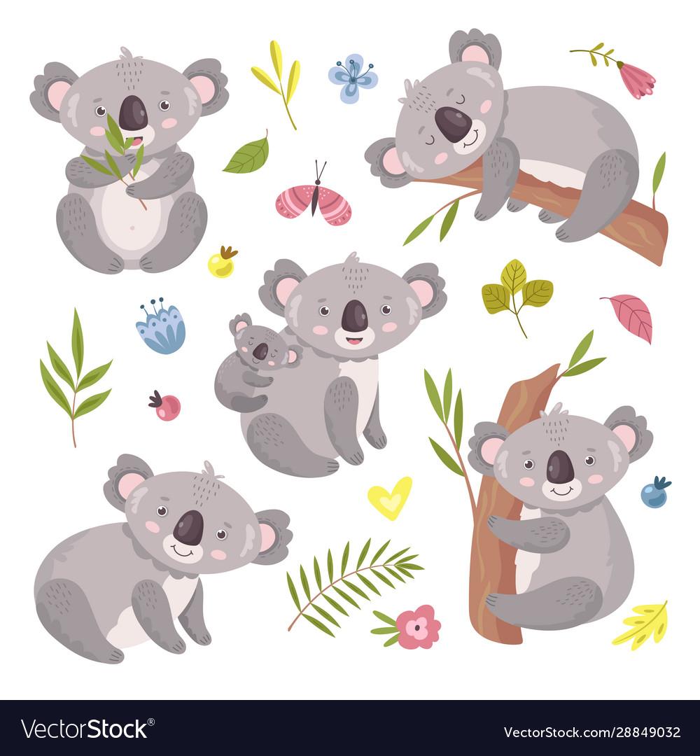 Koala bear australia animal baby hugging mom