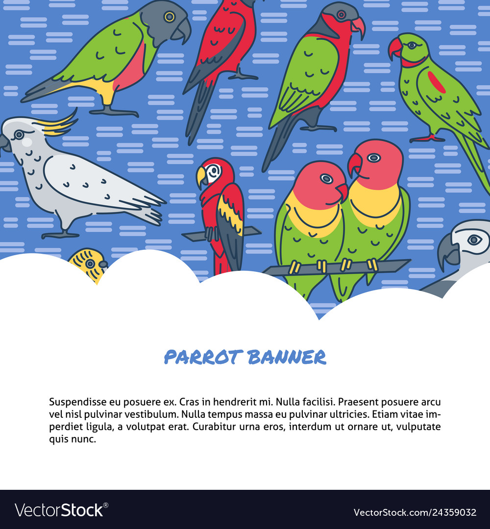 Parrots background in line style with text