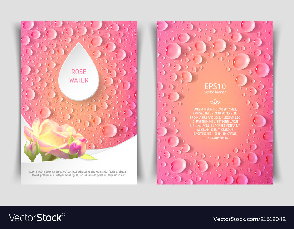 two sided vertical flyer of a4 format with roses vector image