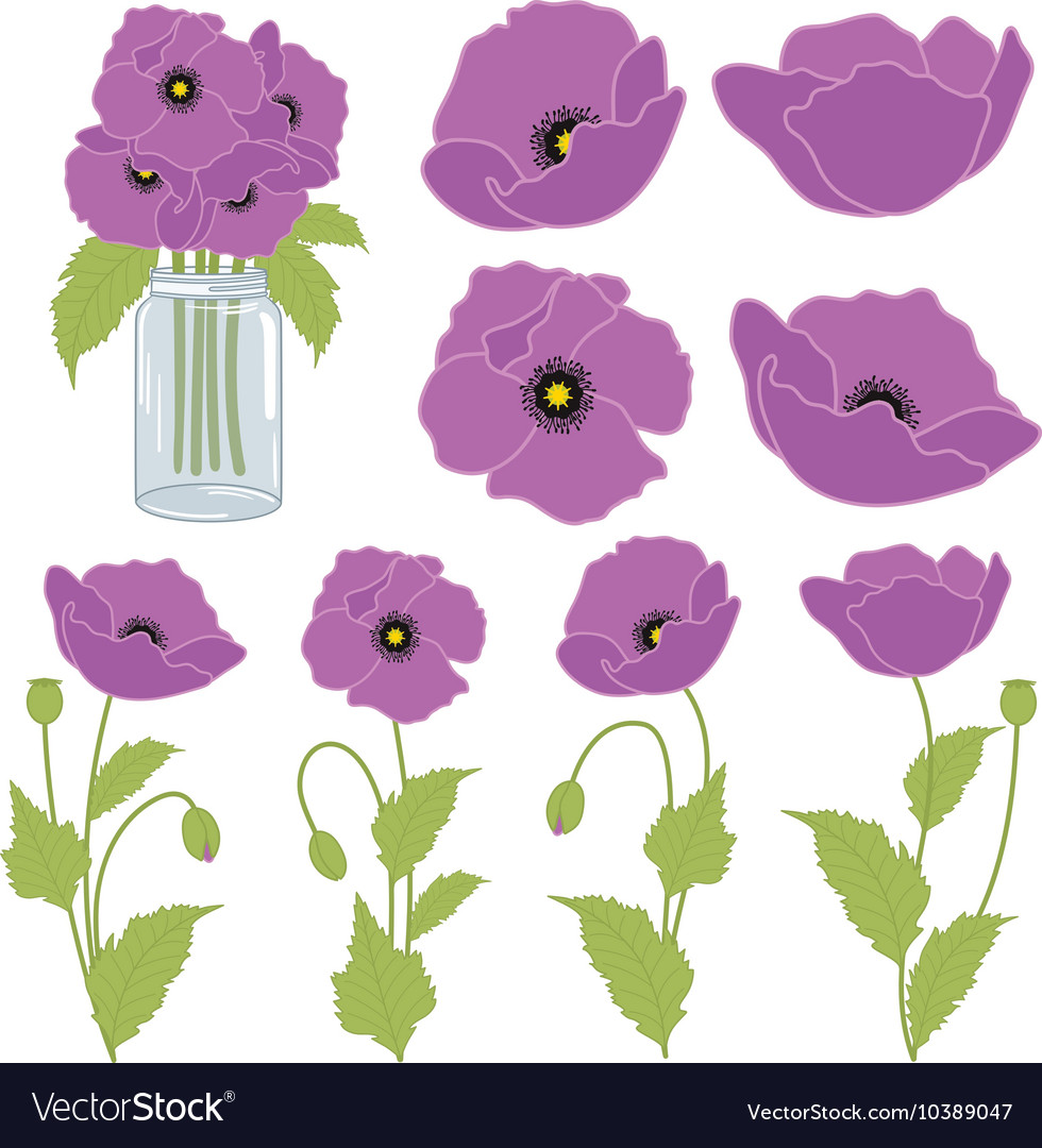 Purple poppies royalty free vector image vectorstock purple poppies vector image mightylinksfo