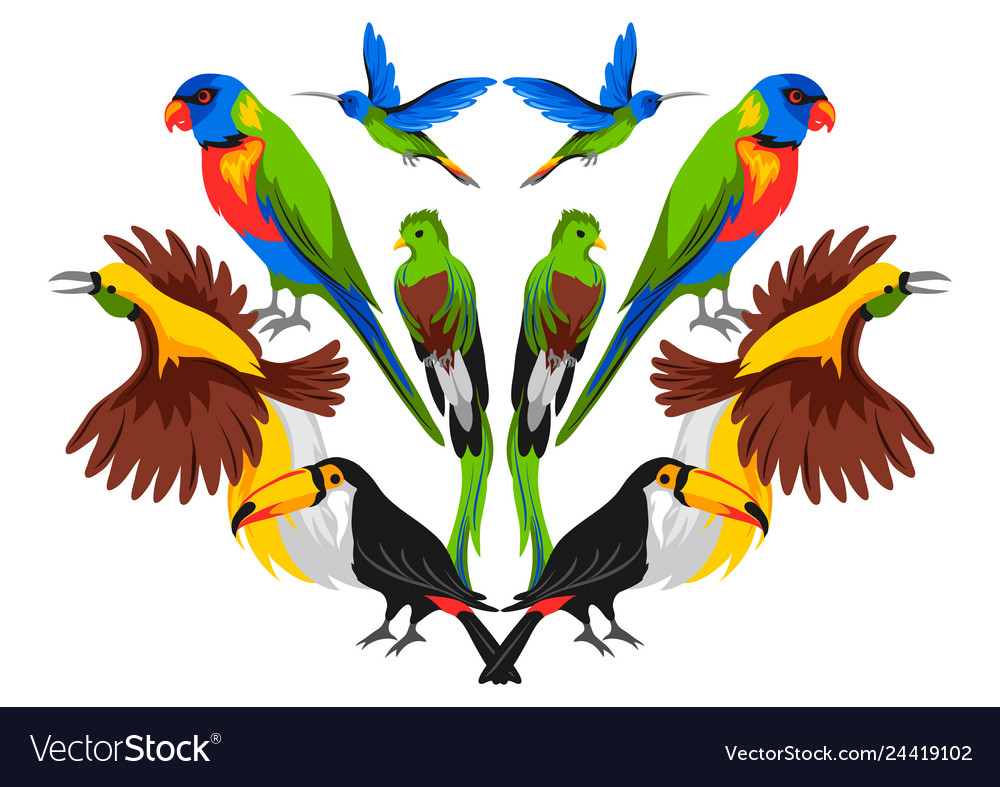 Print design with tropical exotic birds
