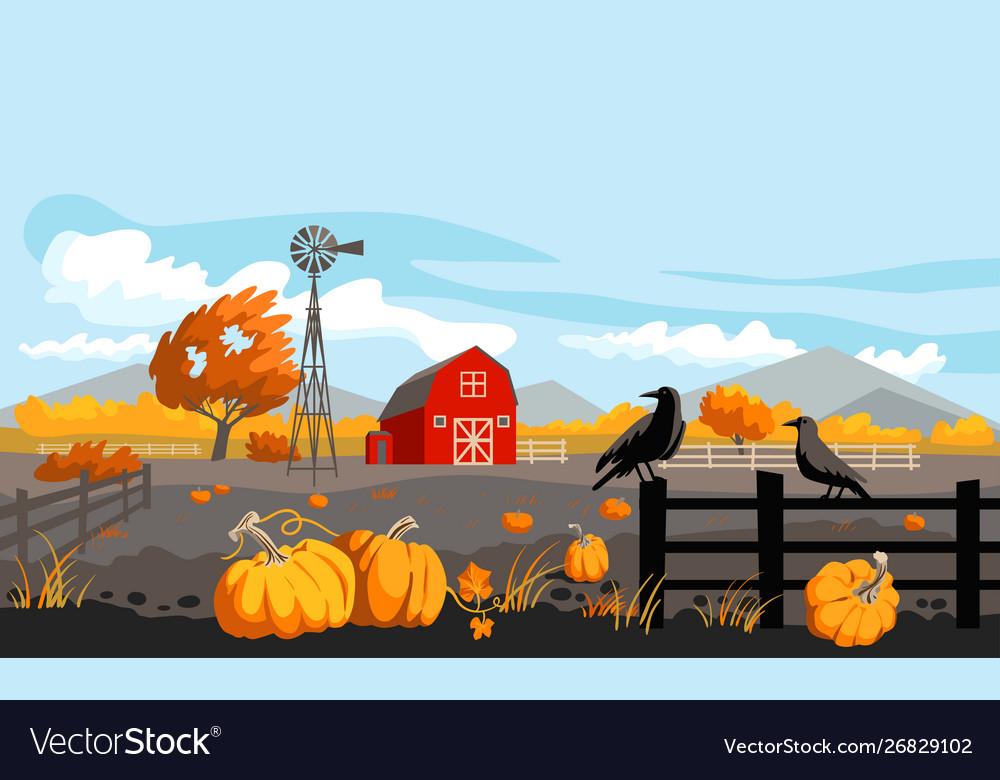 Rural with pumpkins