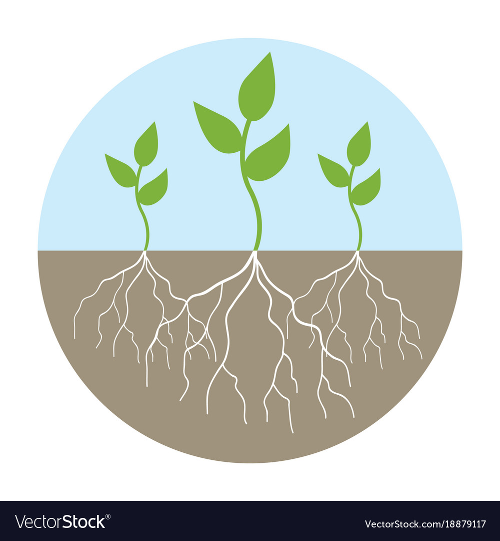 Graphic of young trees with root