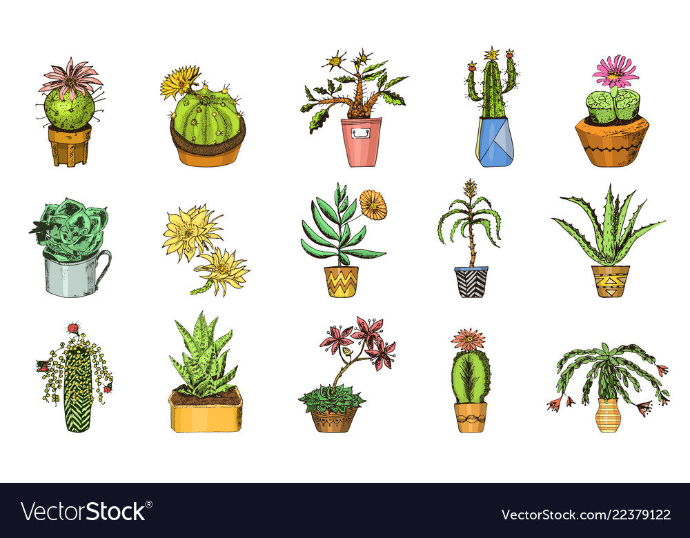 Set of cute cactus and succulents for cards