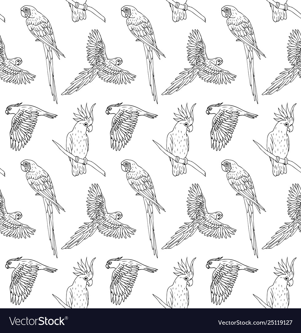 Seamless pattern black line hand drawn parrot