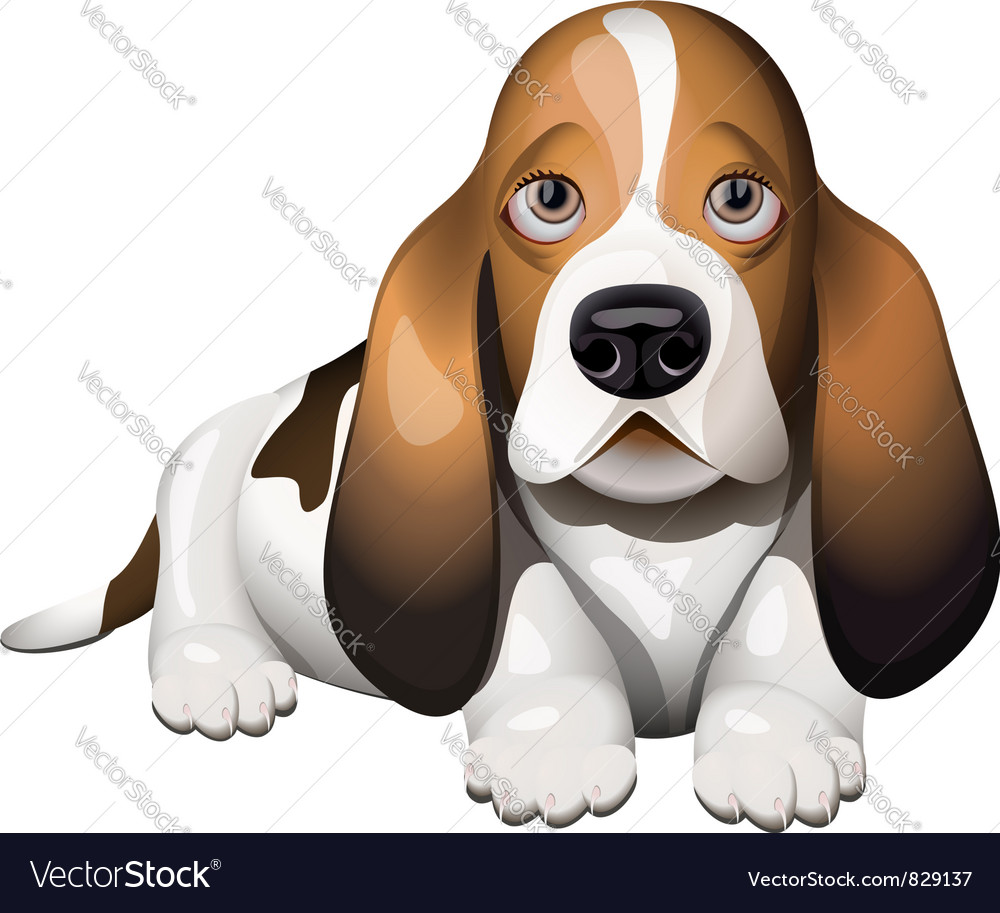 Hush Puppies Vector Images 18