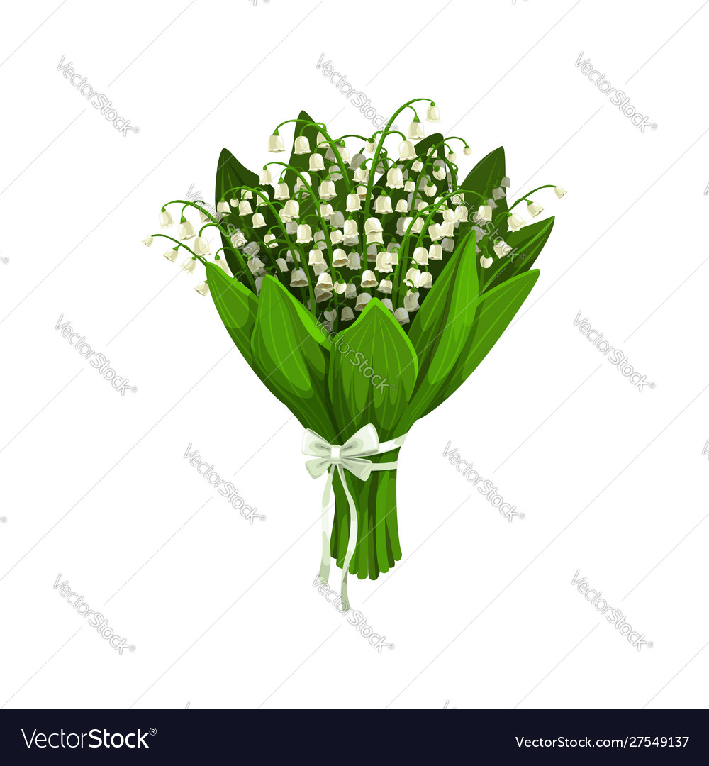 Lilies valley or may-lily flowers Royalty Free Vector Image