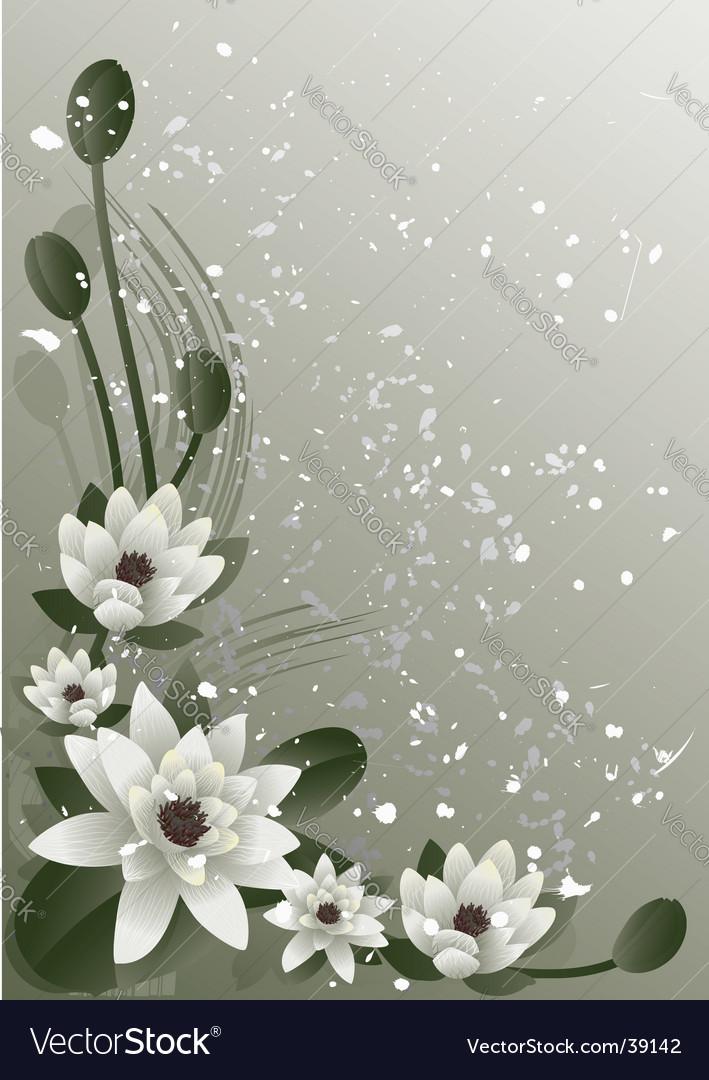 Blossoming lotus vector image
