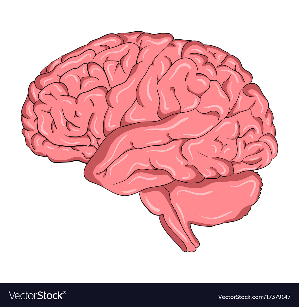brain cartoon symbol icon design beautiful vector image