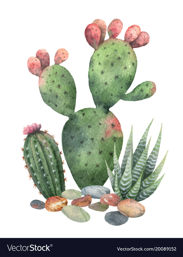 Watercolor collection of cacti and