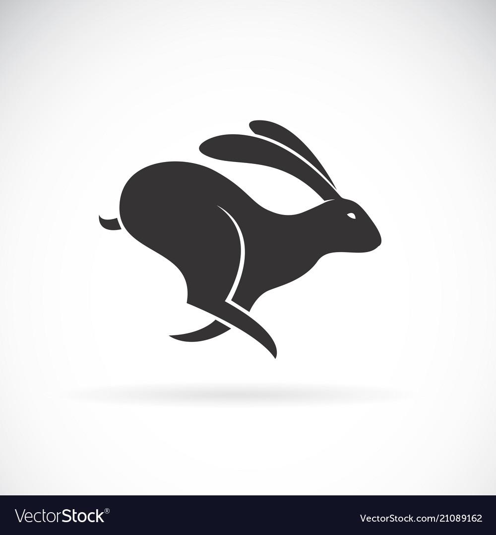 Black rabbit is running on white background wild