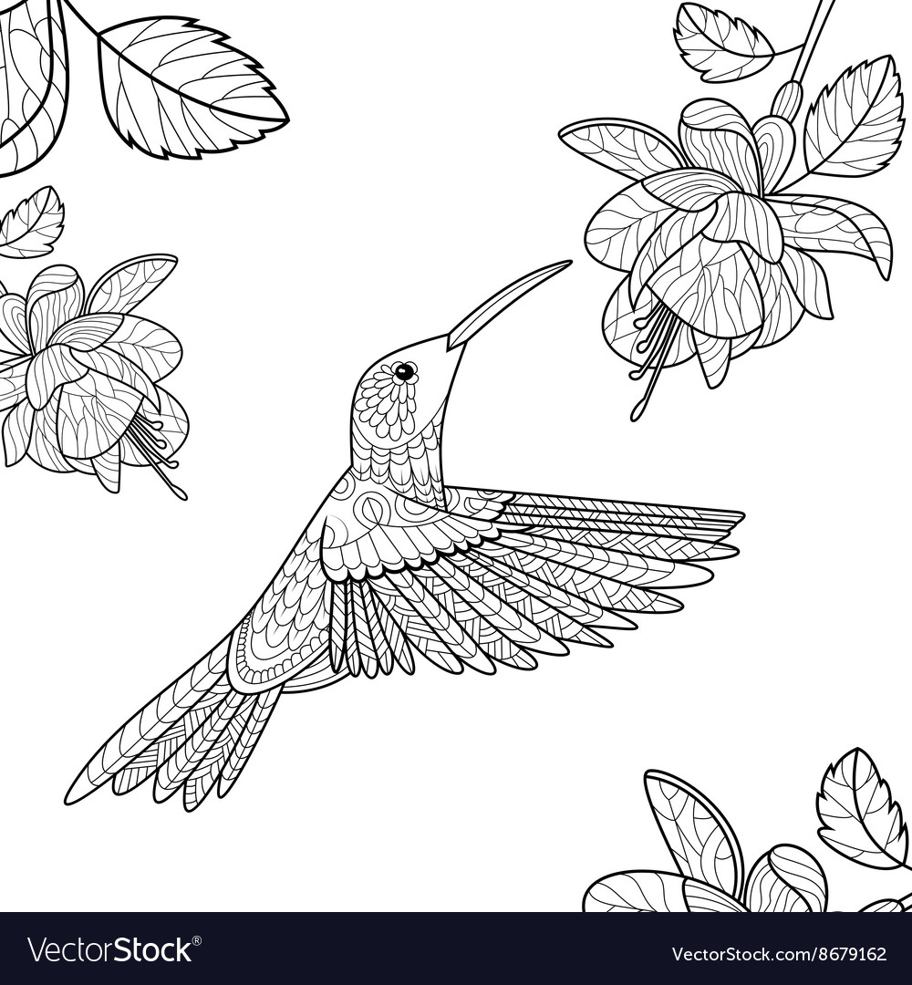 Hummingbird coloring book for adults Royalty Free Vector