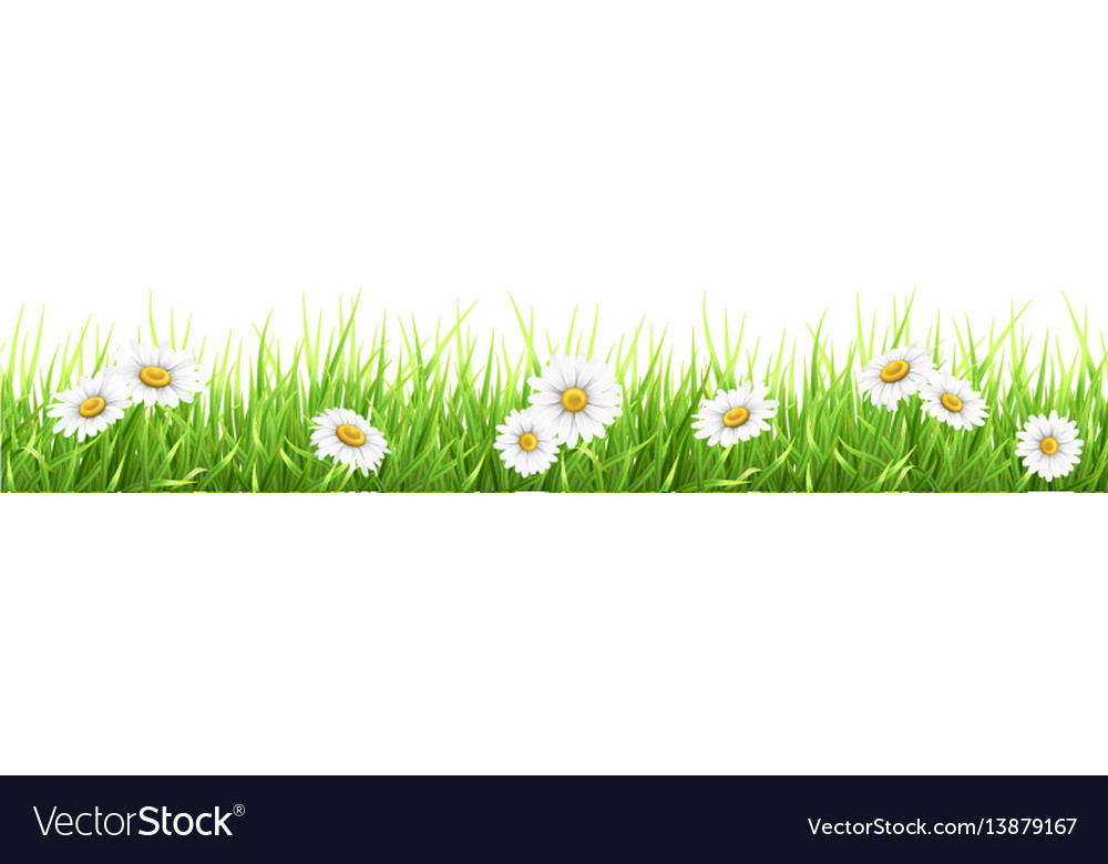 Grass and chamomile