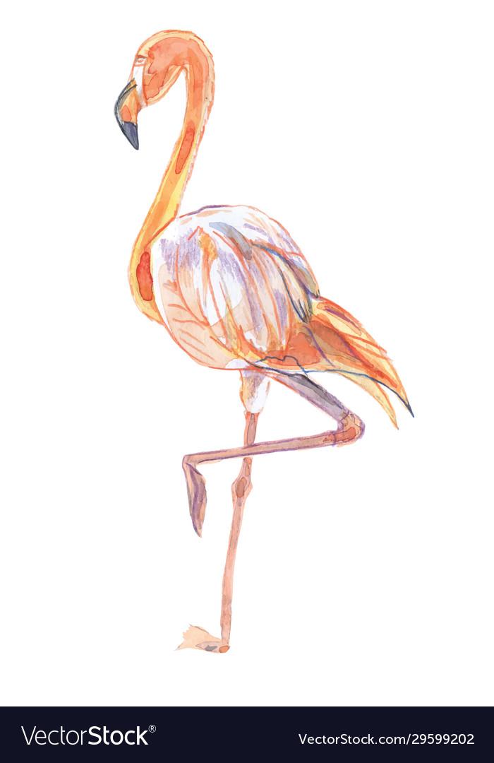 Bird-pink flamingo