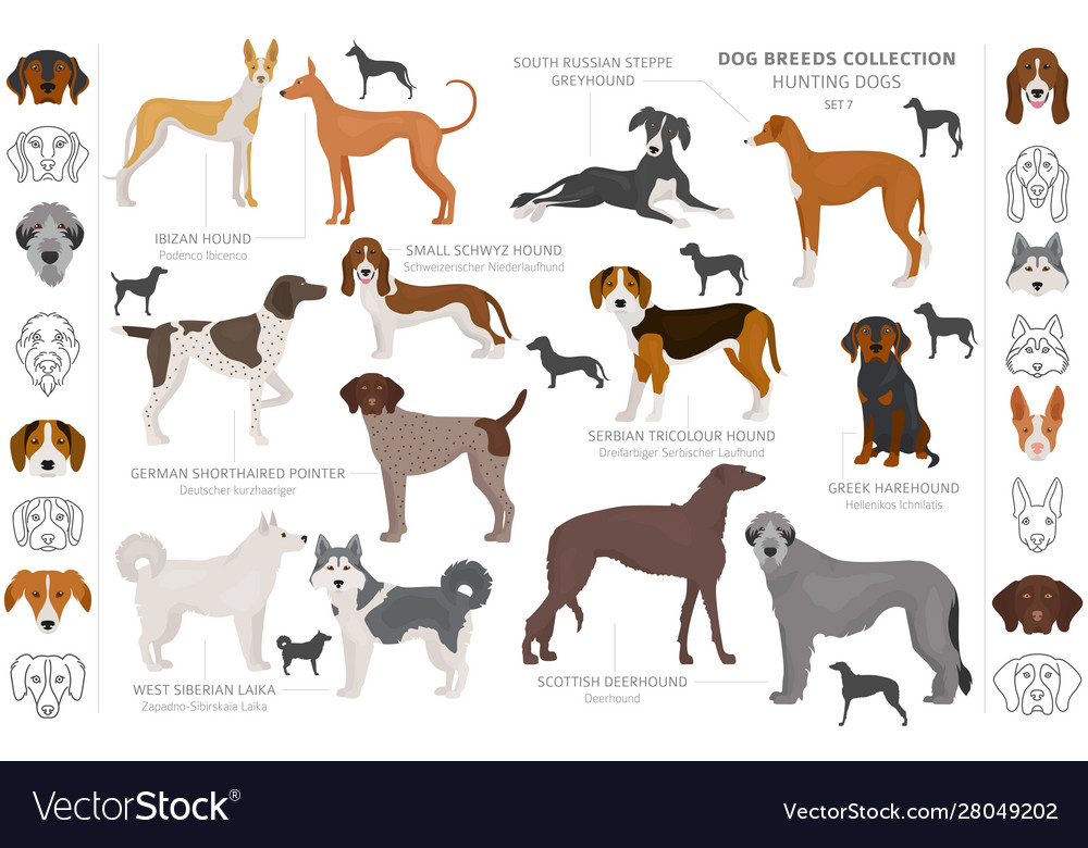Hunting Dogs Collection Isolated On White Clipart Vector Image