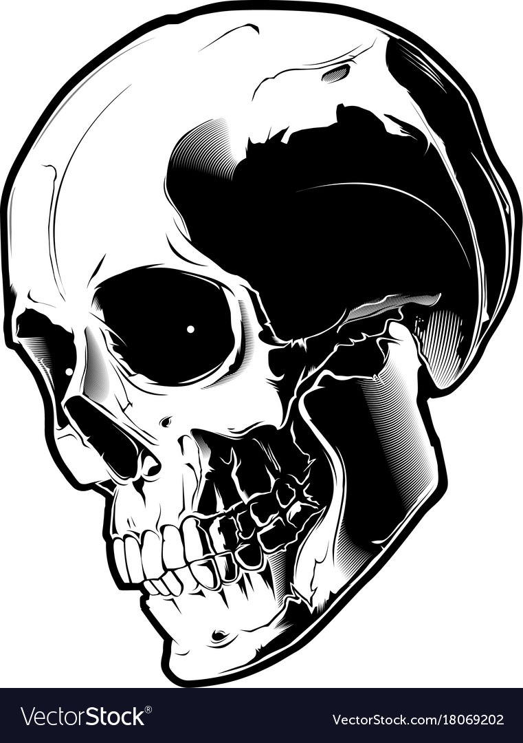 the image of the evil skull royalty free vector image rh vectorstock com skull vector file skull vector clip art