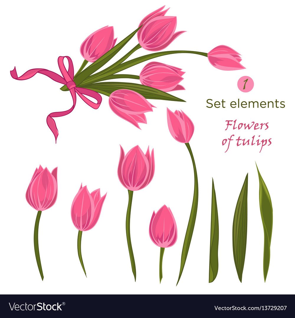 Set of hand-drawn elements for bouquet of pink