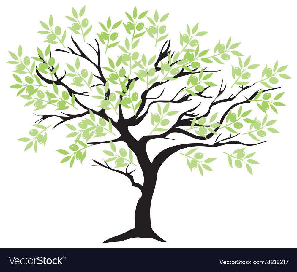 Olive tree branch vector image