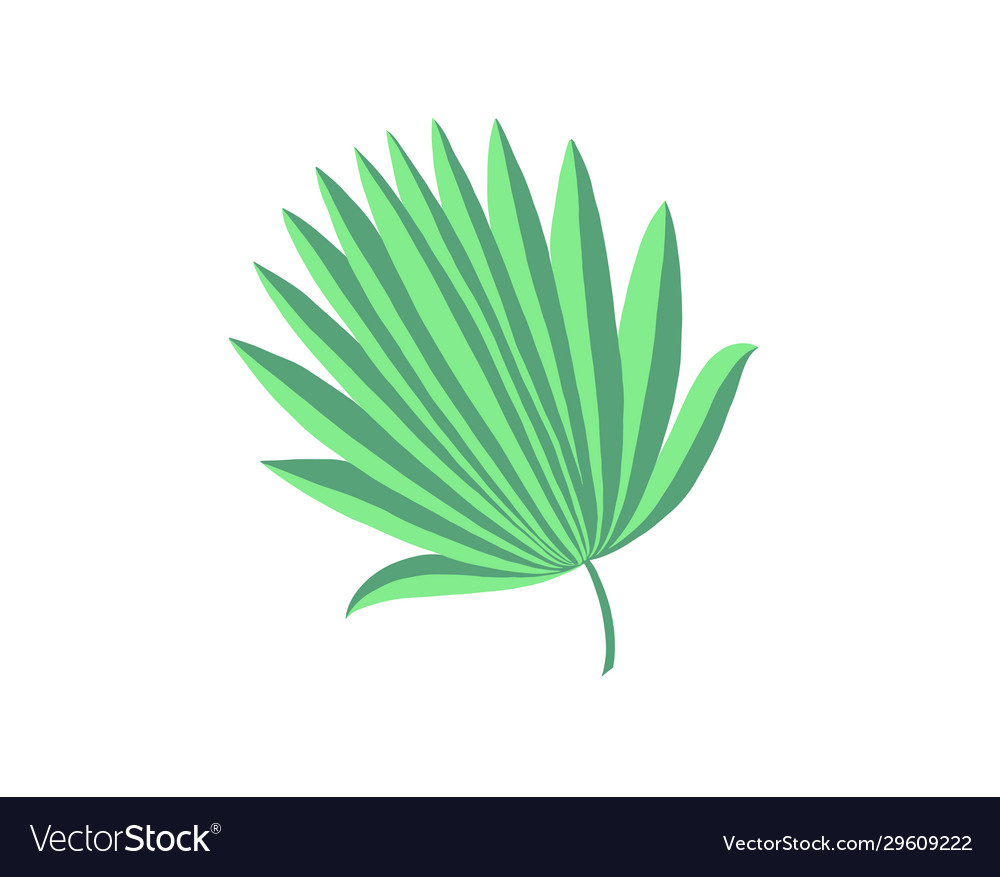 Hand drawing palm leaf isolated on white