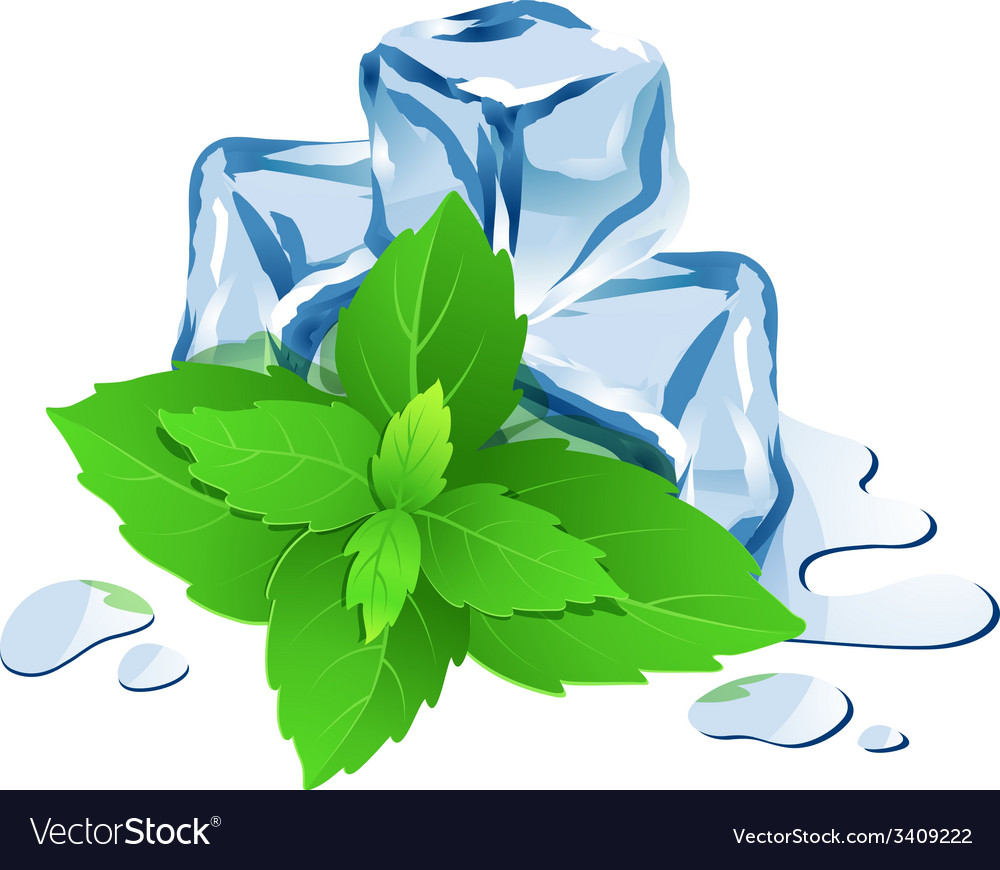 ice cubes with mint isolated on white royalty free vector vectorstock