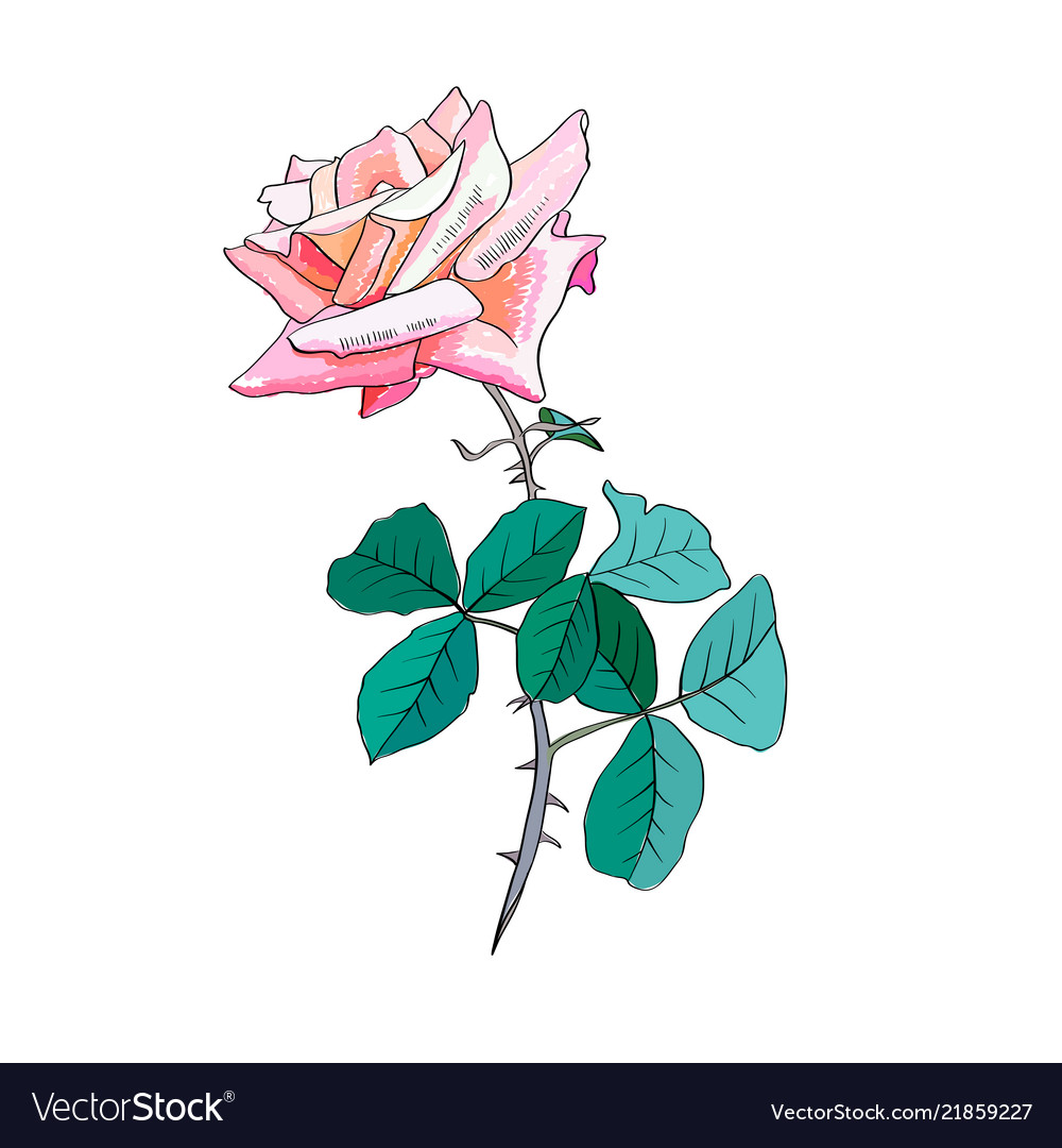 Pink rose watercolor love you soo
