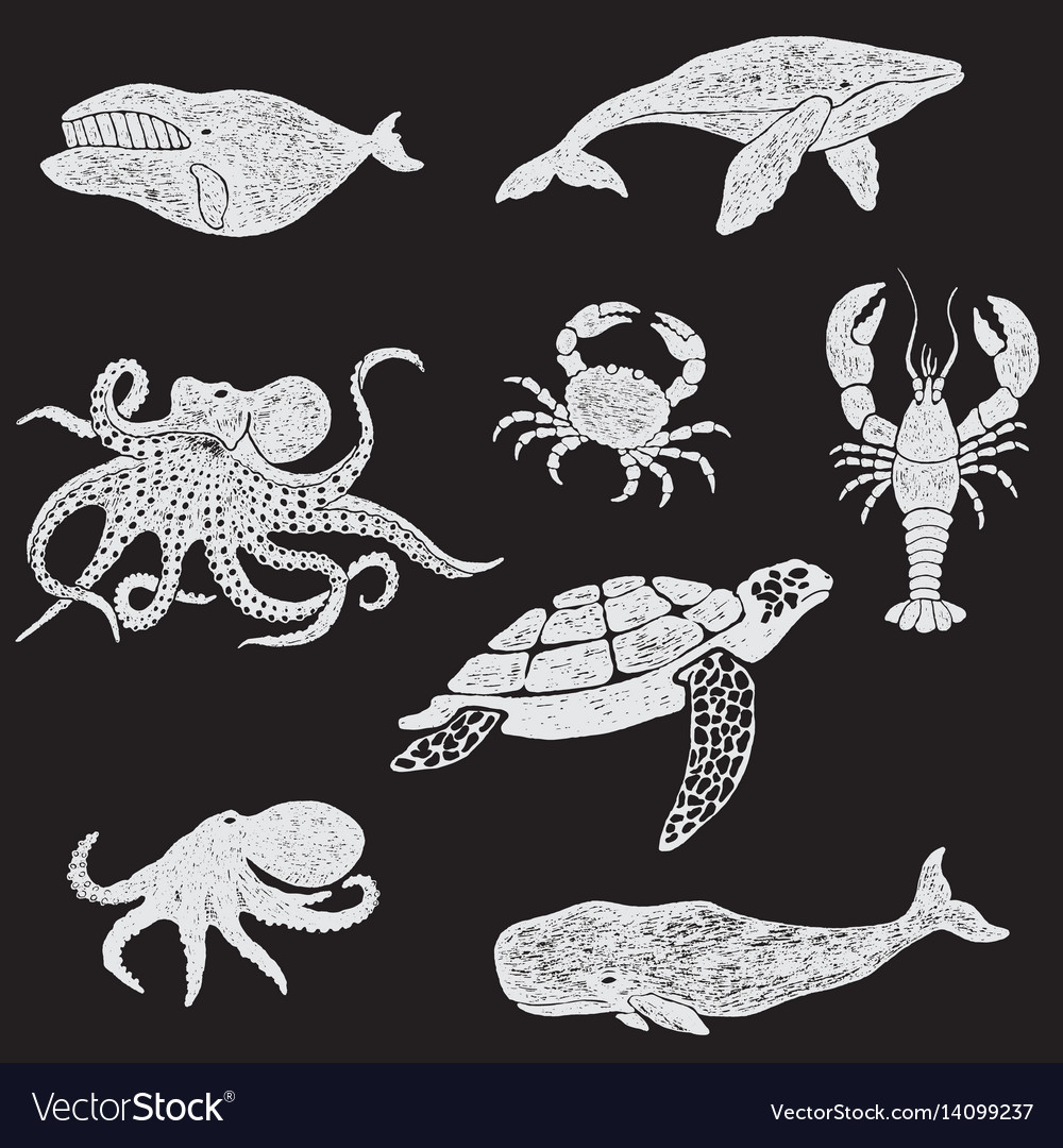 Collection marine animals