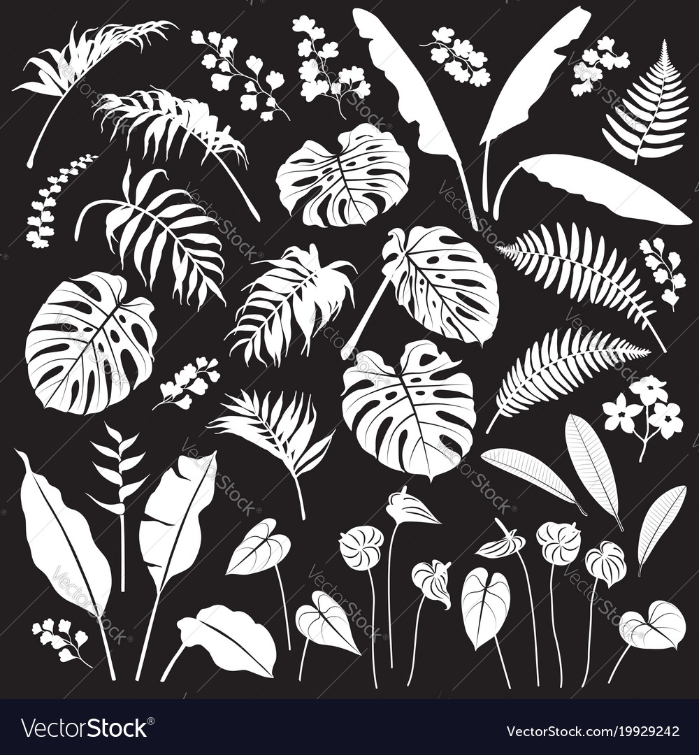 Tropical leaves and flowers white silhouette set