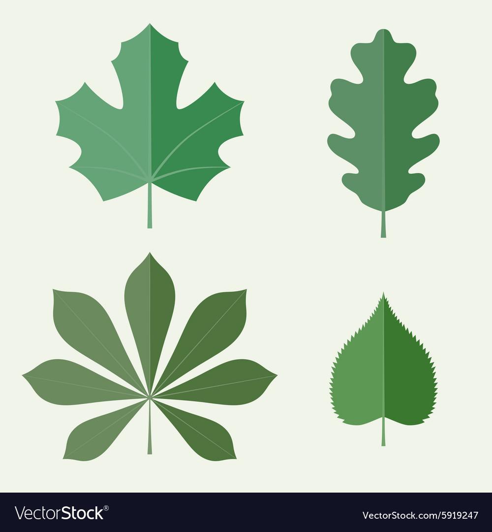 Flat leaves