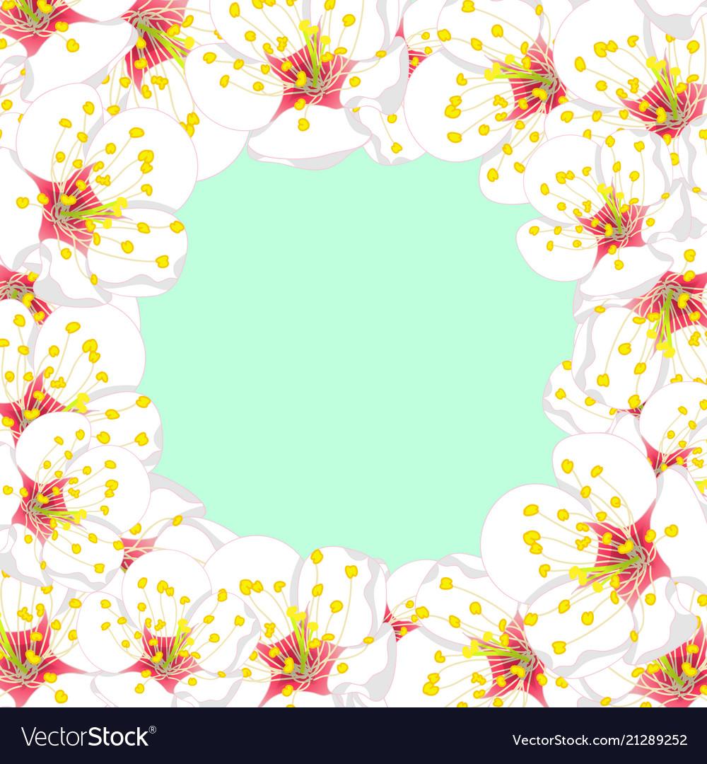 White plum blossom flower border on green mint vector image mightylinksfo