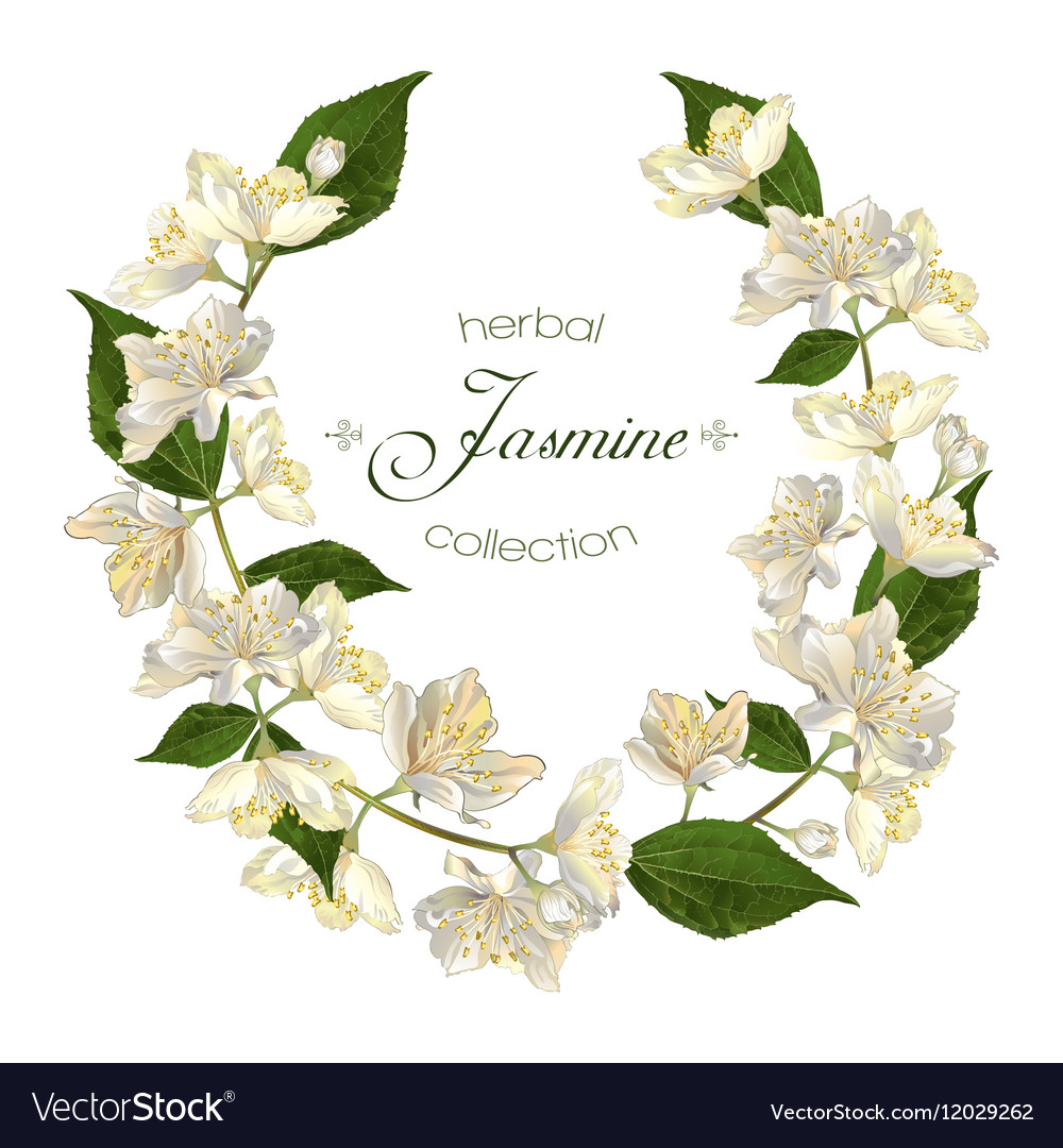 Jasmine Flowers Wreath Royalty Free Vector Image