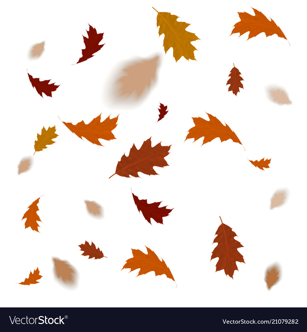 Autumn leaves isolated on white background fallin