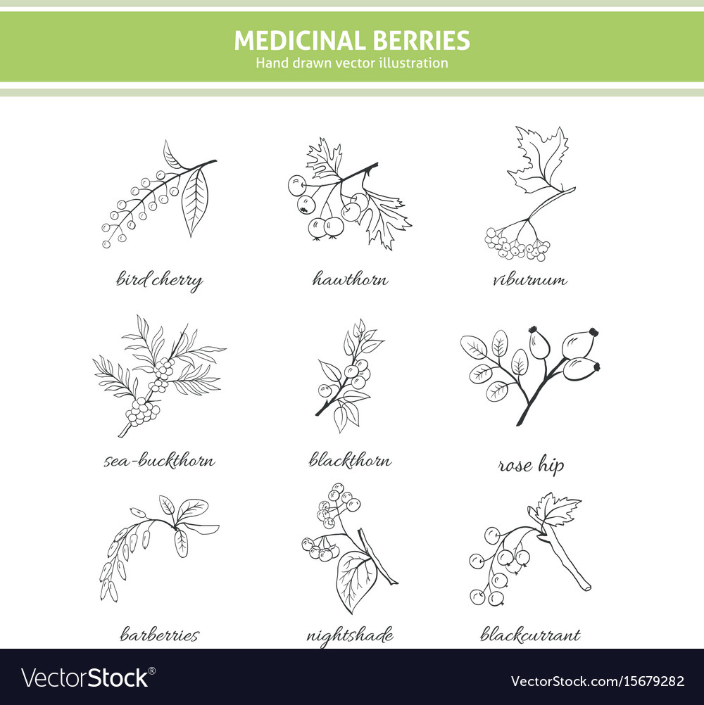 Medicinal berry collection