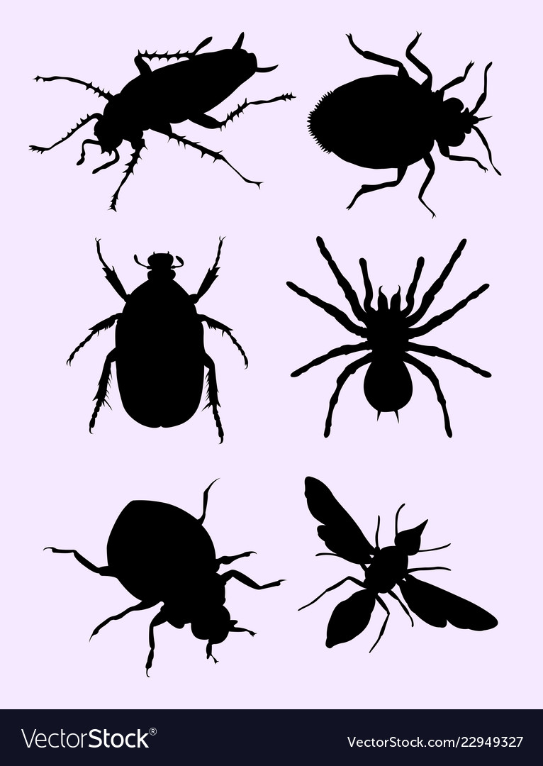 Stink bugs silhouette