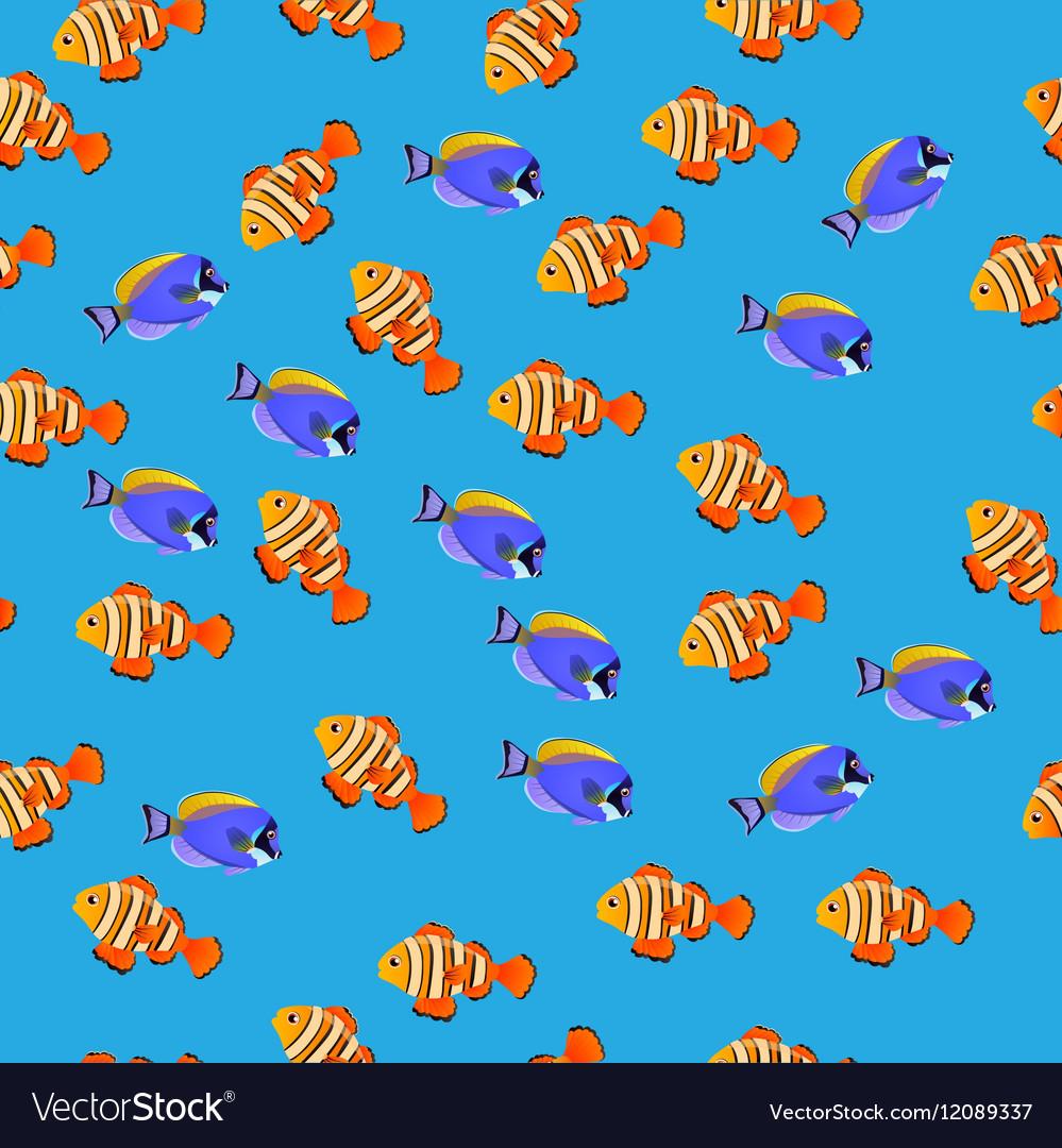 Powder Blue Tang fish