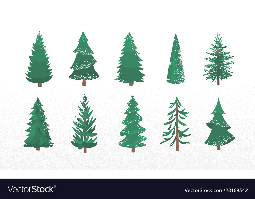 Set fir tree with snow texture pine and spruce