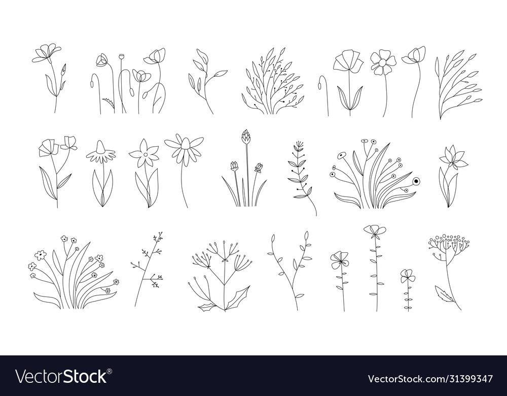 Sketch floral botany collectionwedding flowers