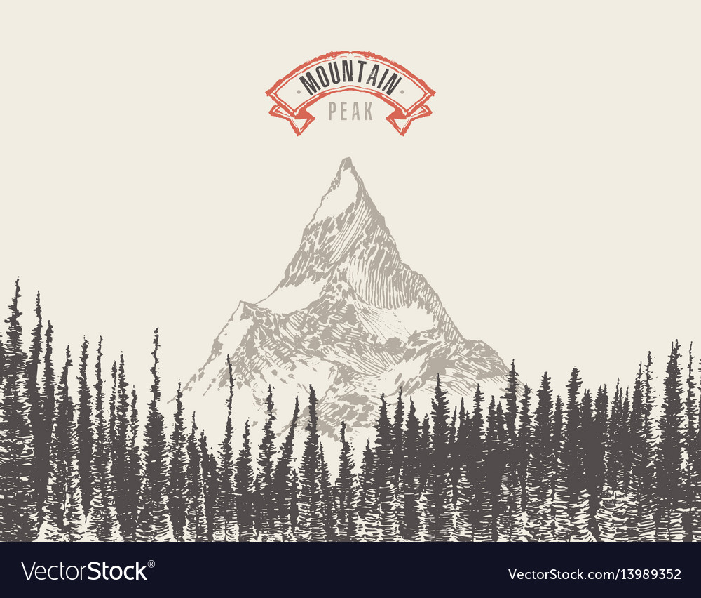 Mountain peak pine forest hand drawn