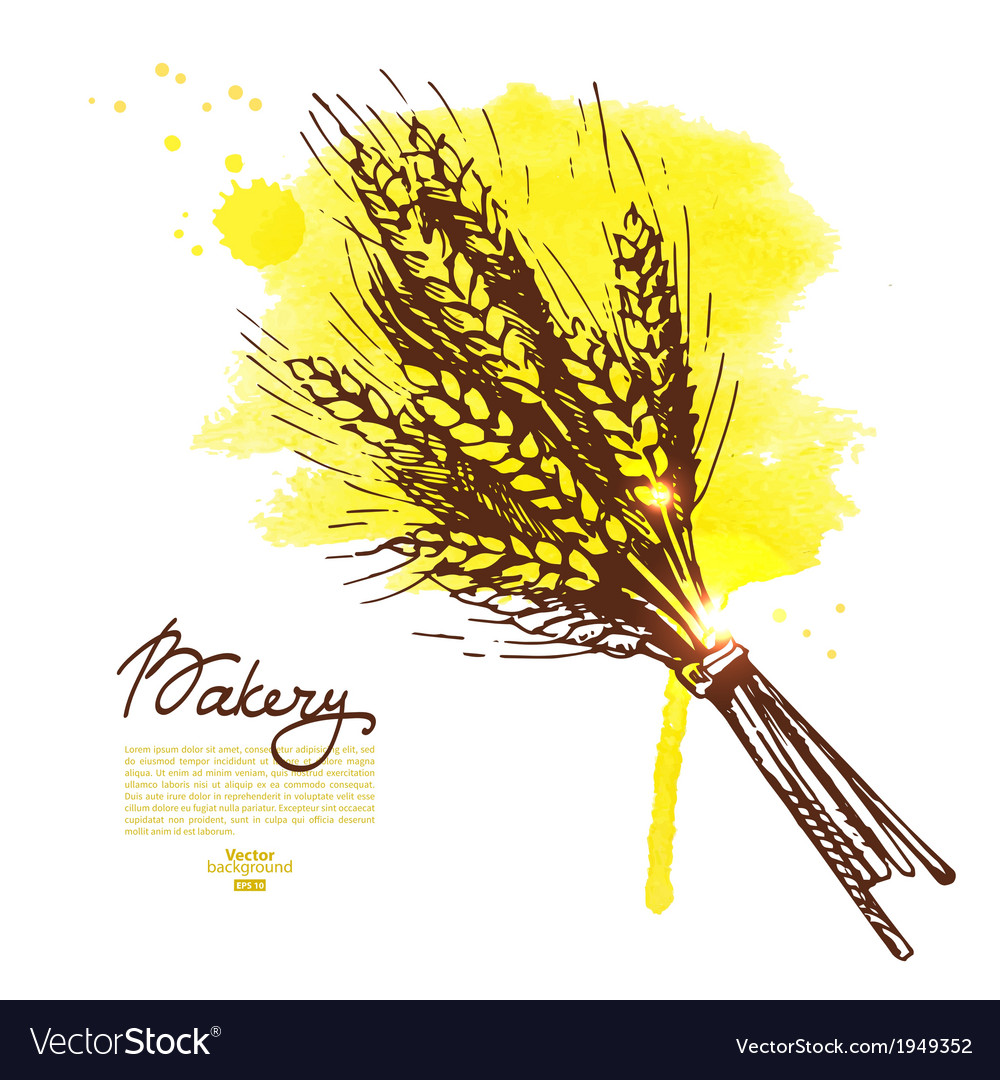 Watercolor wheat sketch background vector image
