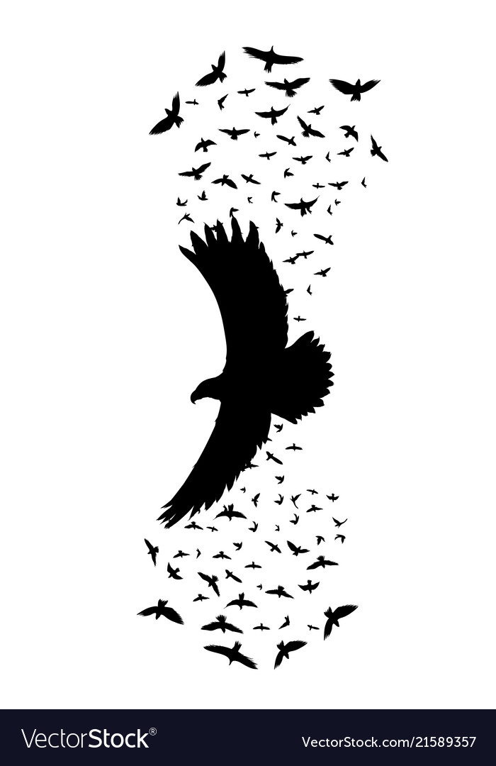 Silhouette of a flying raven