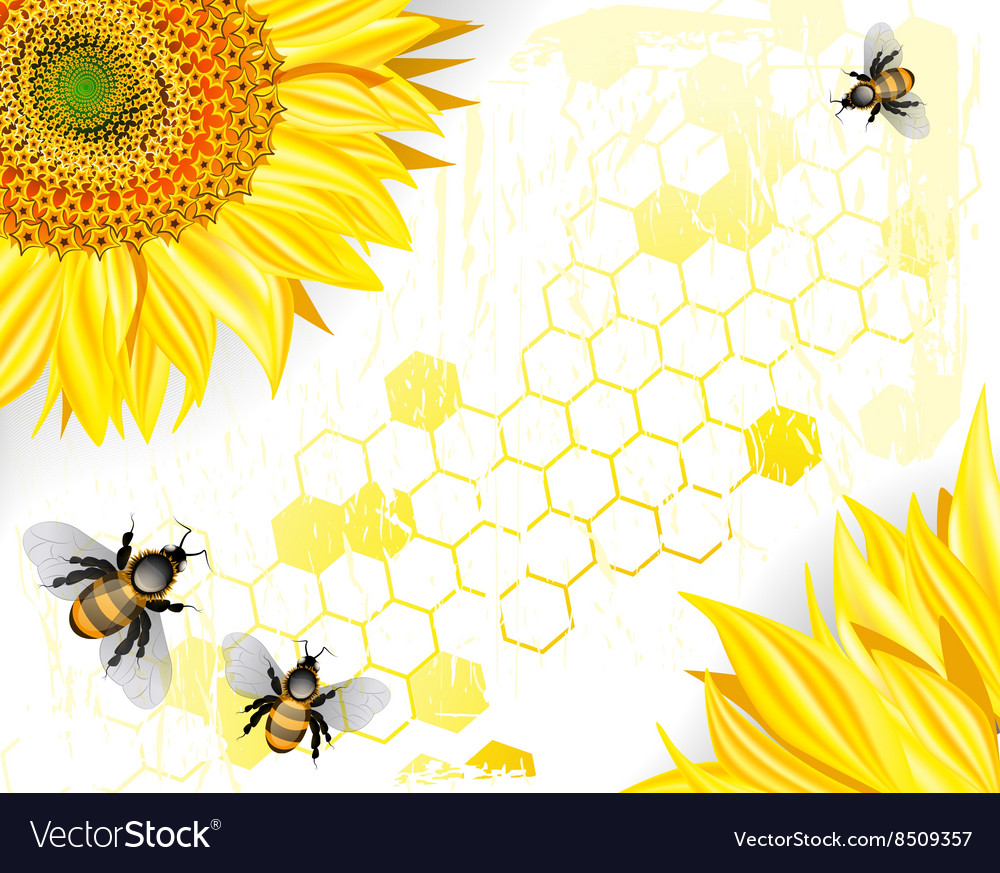 Sunflowers and Bees on a Crisp White Background