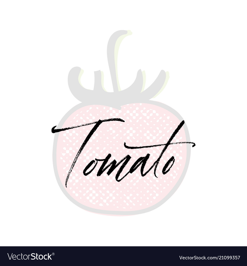 Tomato word on background fruit web vector