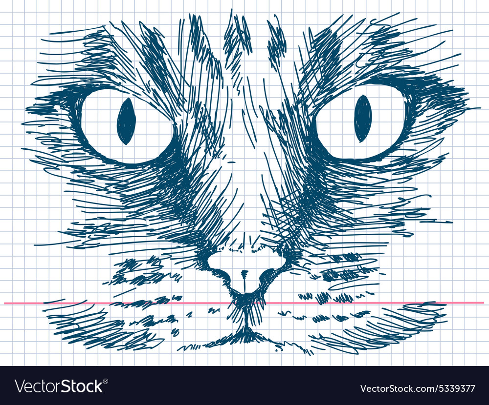 Hand drawn cat face vector image