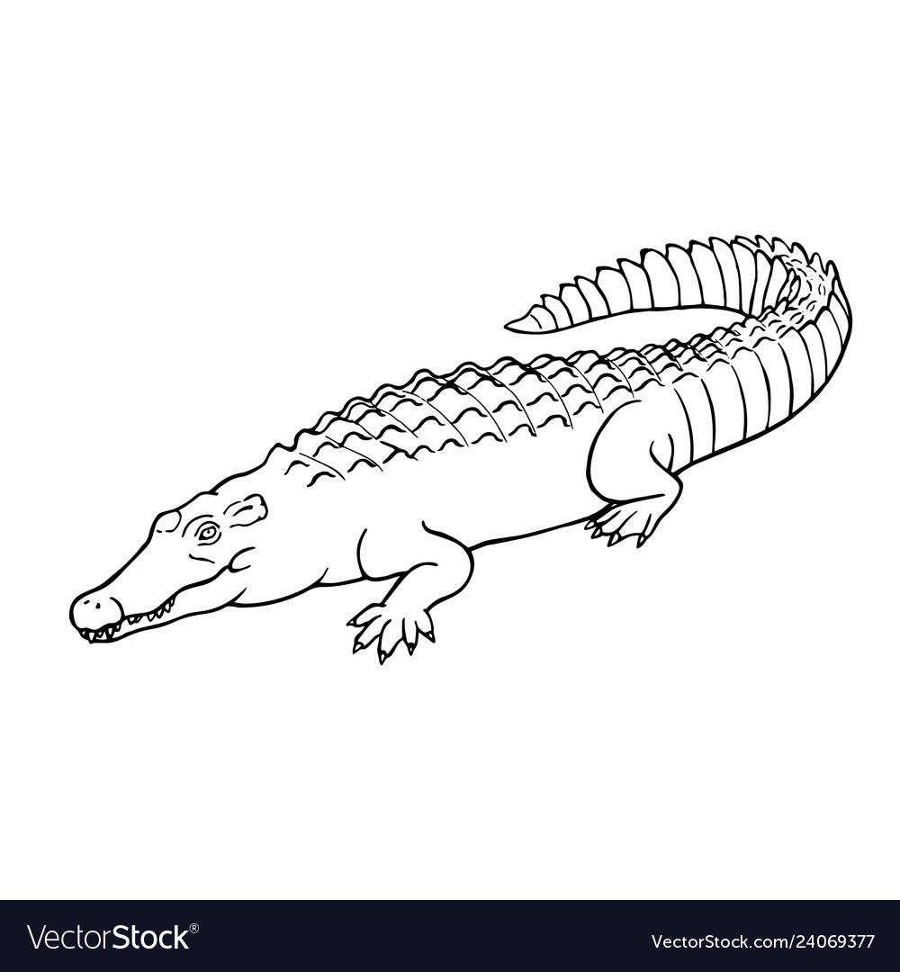 Hand drawn crocodile linear style line