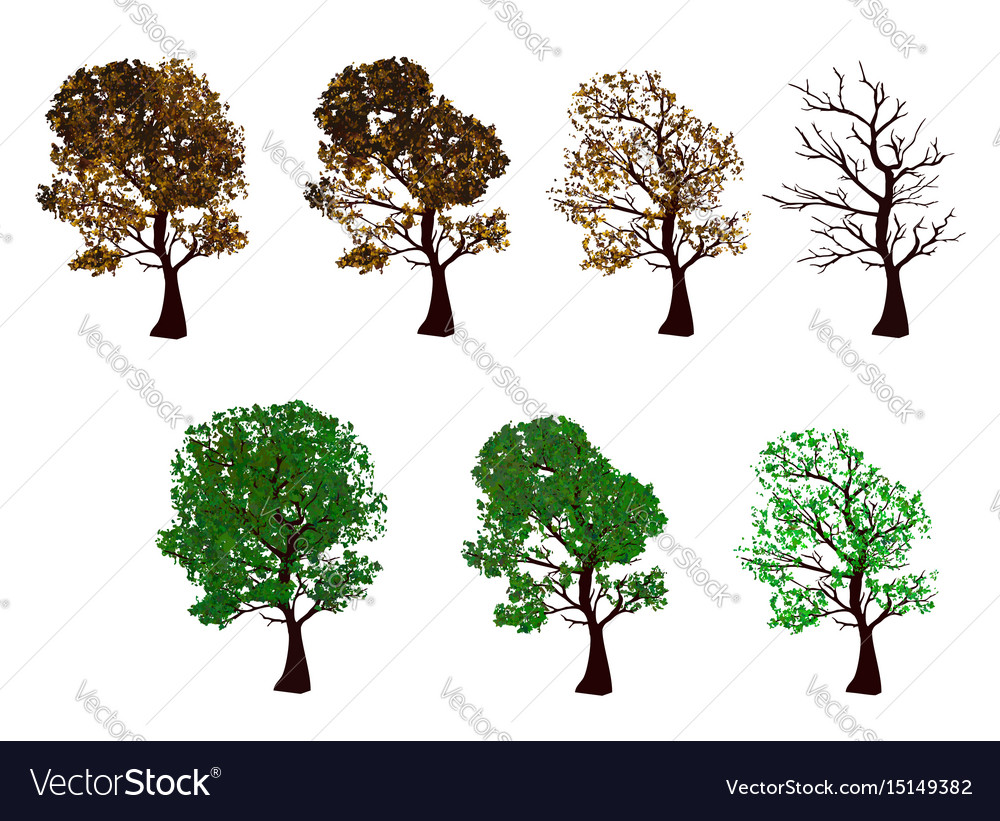 The set of trees four seasons vector image