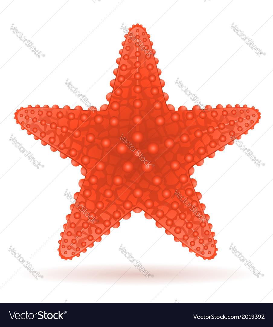 starfish royalty free vector image vectorstock rh vectorstock com starfish vector image starfish vector image