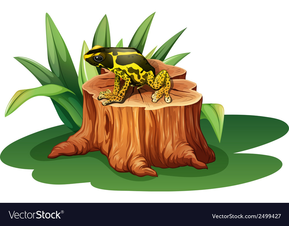 A frog above the stump
