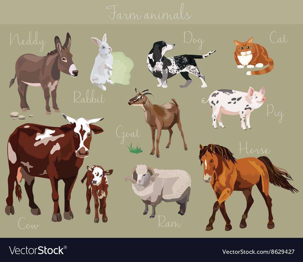 Set of different farm animals