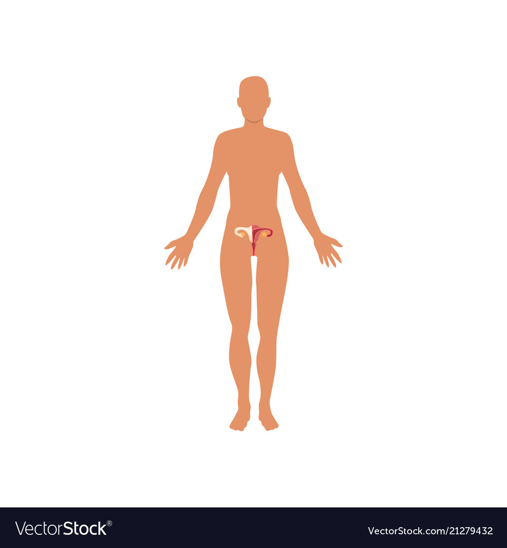 Female, Sexual & Anatomy Vector Images (54)