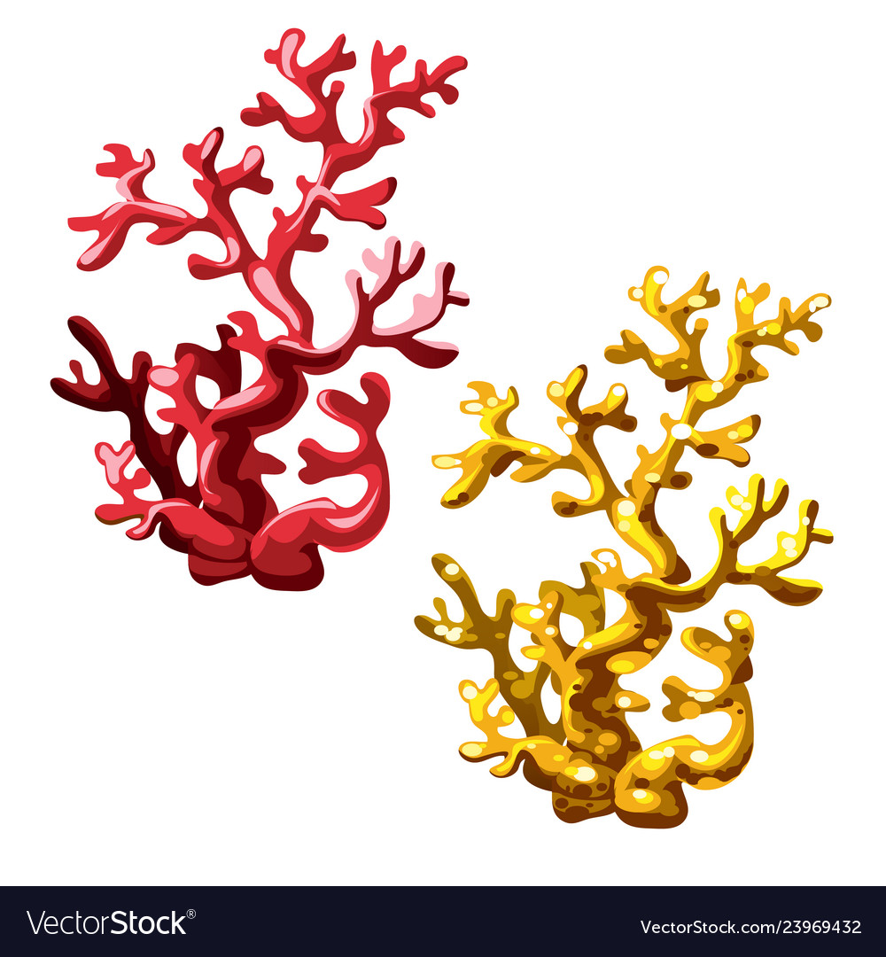 Set of red and golden corals isolated on white