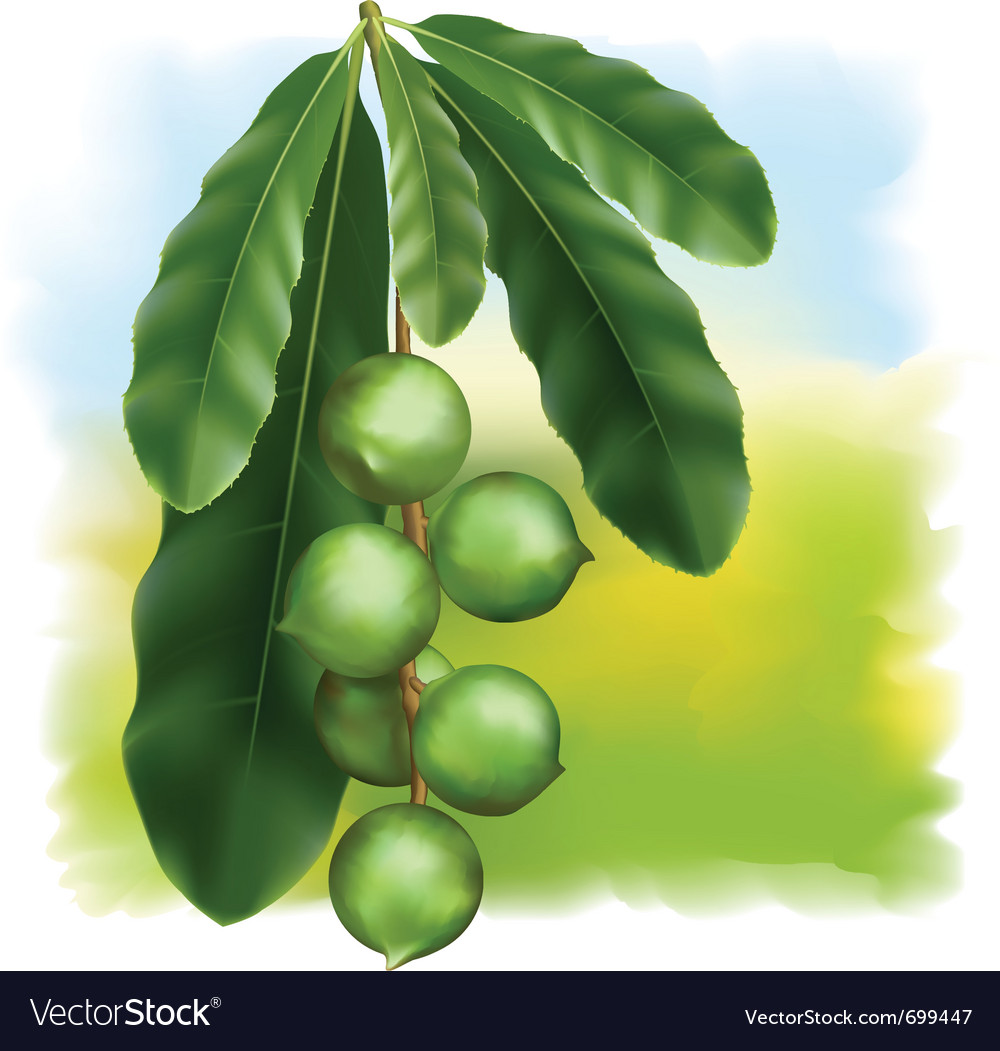 Leaves and fruits vector image